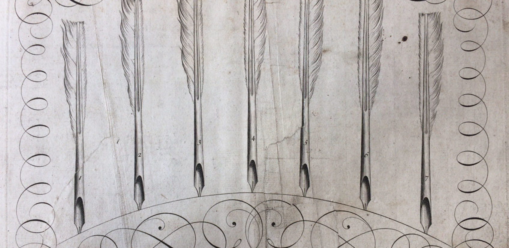 shelley-quills